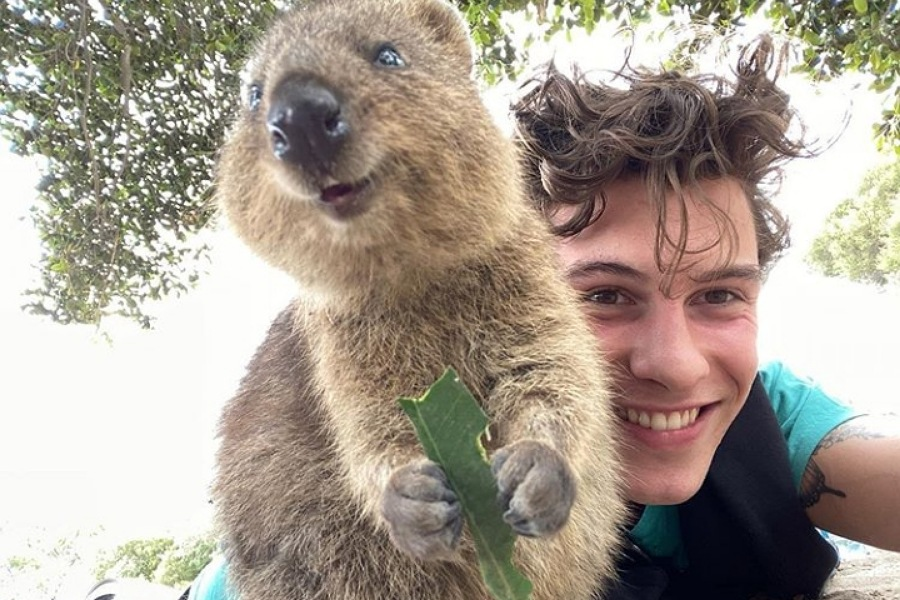 "Shawn Mendes conquista a internet com o animal ""mais feliz do mundo"" –  Virgula"